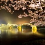 山口県の桜の名所、錦帯橋と吉香公園の桜の見ごろは!?