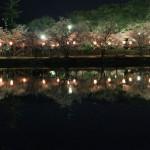 佐賀県桜の名所、小城公園がおすすめ!桜の見ごろは!?