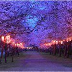 鹿児島の桜の名所、忠元公園がおすすめ!桜の見ごろは?