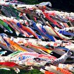 鯉のぼり観光|必見!1,200匹が泳ぐ「泳げ鯉のぼり相模川」!