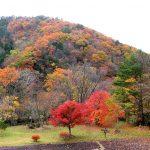 秋キャンプ|岡山県黒木キャンプ場の大自然と紅葉が凄い!!