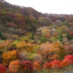 秋キャンプ|群馬県わらび平森林公園キャンプ場の秋の景観が凄い!