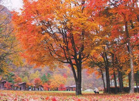 秋キャンプ紅葉
