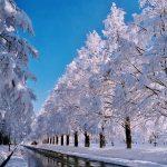 メタセコイア並木の冬の景観が凄い!滋賀マキノ高原へ行こう!