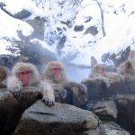 冬の地獄谷温泉の入浴するニホンザルが超必見!