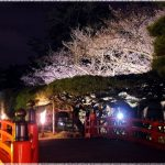 香川県の桜の名所、栗林公園の優雅な景観!見ごろは!?