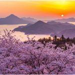 愛媛県の桜の名所、開山公園の桜の見ごろは!?