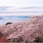 香川県の桜の名所、紫雲出山の絶景がおすすめ!見ごろは!?