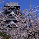 熊本城の桜は?復興が待ち遠しい日本を代表する名城の桜!