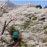 宮城県屈指の桜の名所、船岡城址公園の桜の見どころは!?