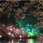 新潟県の桜の名所、高田公園の夜桜がおすすめ!見ごろは!?