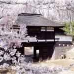 長野県の桜の名所、小諸城址 懐古園の風情豊かな桜の見ごろは!?