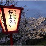 新潟県の桜の名所、大河津分水の豪華な桜並木の見ごろは!?