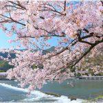 京都の桜の名所、嵐山は紅葉だけじゃない!桜の見ごろは!?