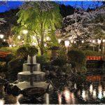 鳥取県の桜の名所、打吹公園の夜桜が幻想的!見ごろは!?