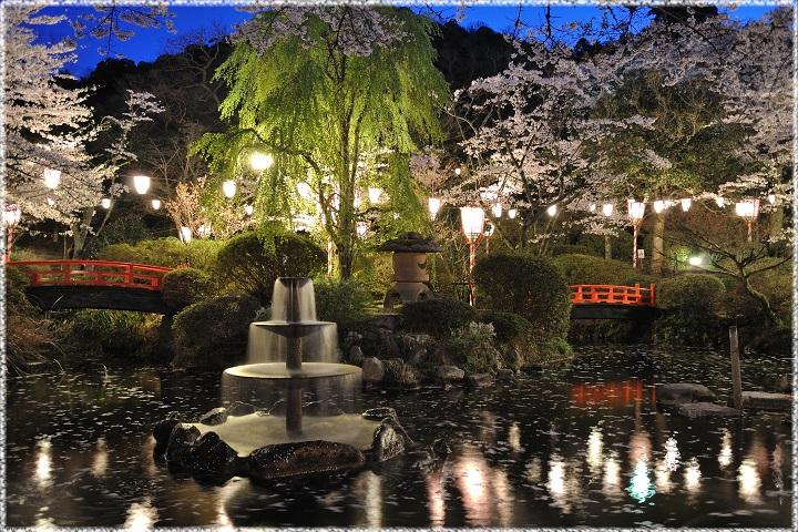 鳥取県の桜の名所、打吹公園の夜...