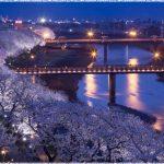 福井県の桜の名所、足羽川沿いの桜並木の見ごろは!?