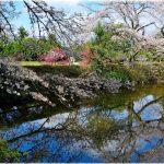 千葉県の桜の名所、清水公園の迫力ある桜の見ごろは!?