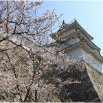兵庫県の桜の名所、明石公園の眺めに感動!桜の見ごろは!?