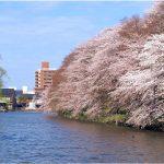 富山県の桜の名所、高岡古城公園の水濠からの桜の見ごろは!?