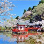 千葉県の桜の名所、茂原公園の展望台から望める桜の見ごろは!?