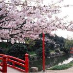 香川県の桜の名所、琴弾公園の絶景!桜の見ごろは!?
