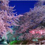 山形県の桜の名所、烏帽子山(えぼしやま)公園の見ごろは!?