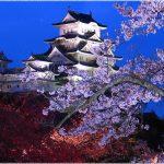 兵庫県の桜の名所、国宝姫路城の桜も国宝級!見ごろは!?