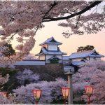 石川県の桜の名所、北陸随一の人気を誇る兼六園の桜の見ごろは!?