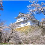 岡山県の桜の名所、津山城(鶴山公園)の桜の見ごろは!?