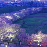岩手県の桜の名所、北上市立公園展勝地の桜の見どころは!?