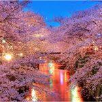 東京都の桜の名所、目黒川に映り込む優雅な桜並木の見ごろは!?