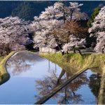 三重県の桜の名所、三多気の棚田に映える桜の見ごろは!?