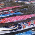 鯉のぼりがホントに泳ぐ!?全国的に珍しい石川県の浅野川鯉流し!