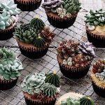 多肉植物ケーキのクオリティが高すぎるとSNSで話題!!