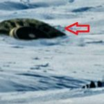 カナダでUFOが墜落!?カナダ軍が必死で隠ぺいする理由とは?